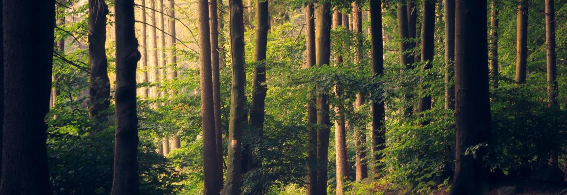 Søg støttekroner til at plante skov